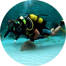 Certified Divers, Snorkelers and Passengers