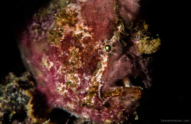 Papagayo Dive Sites 4