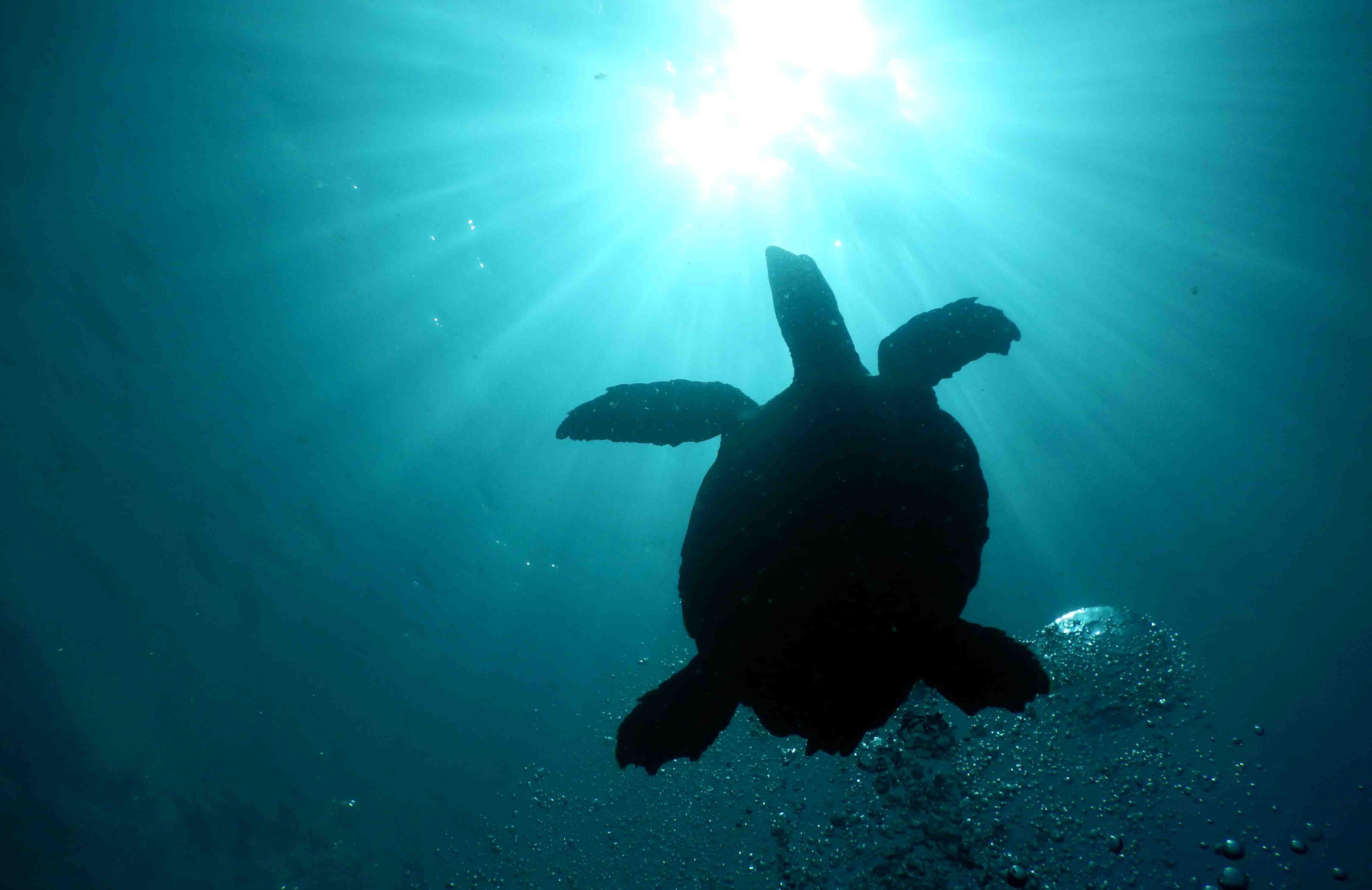 Papagayo Dive Sites 5