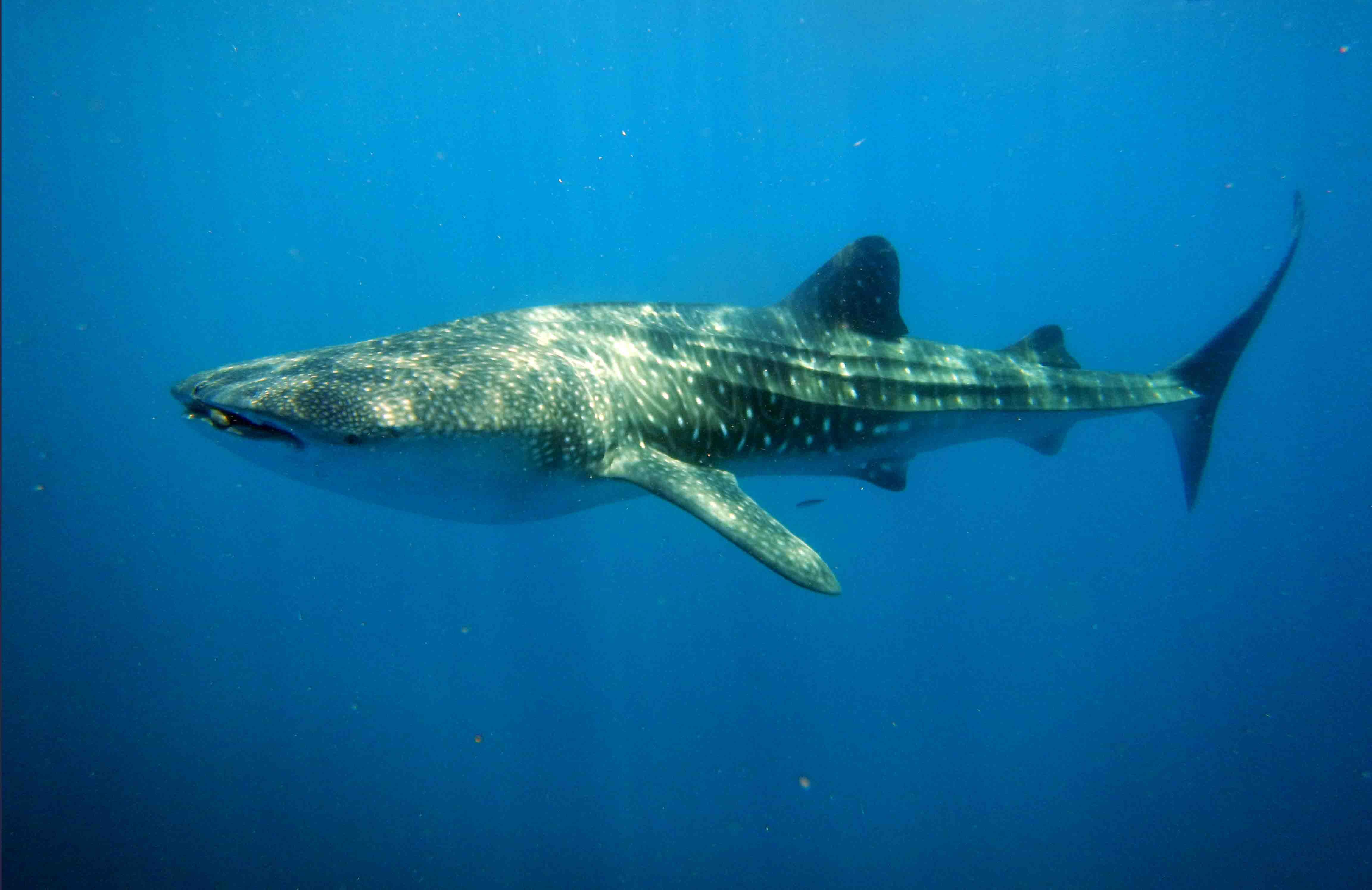 Papagayo Dive Sites 6