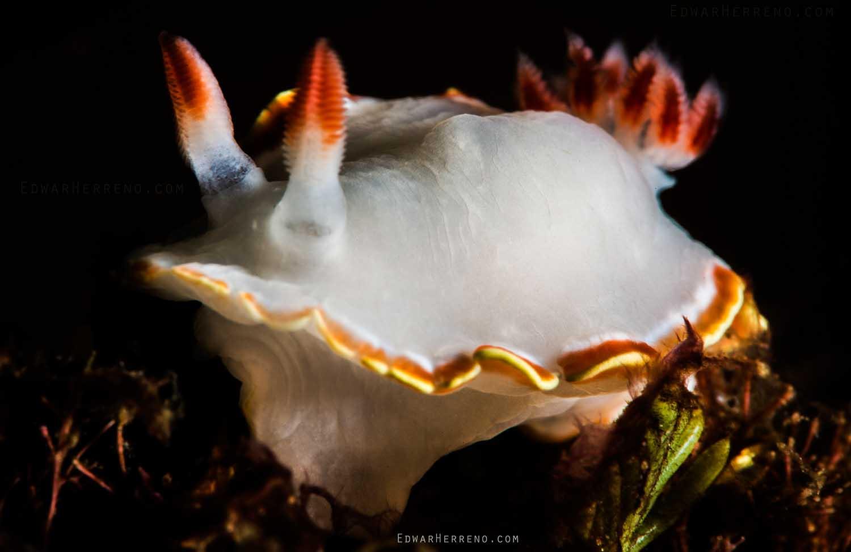 Papagayo Dive Sites 3