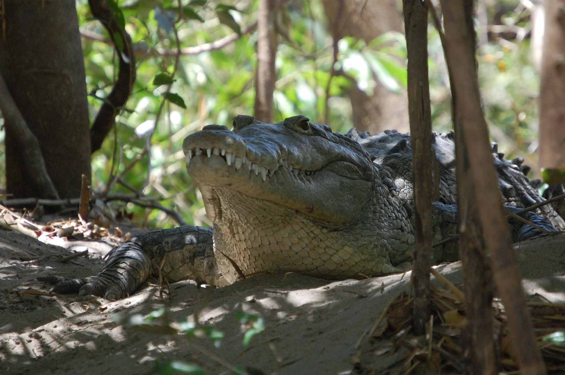 deep blue palo verde tour crocodile